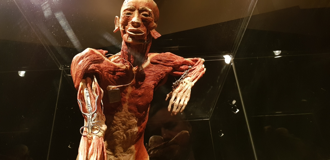 Body Worlds, czyli pociąg do kultury