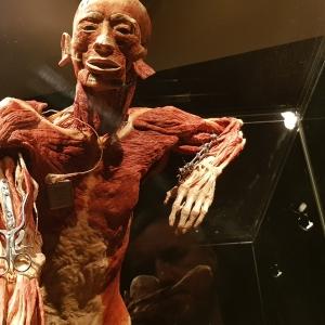 Body Worlds, czyli pociąg do kultury